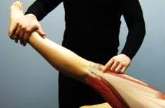 Nowości szkoleniowe – Kurs Anatomii Palpacyjnej